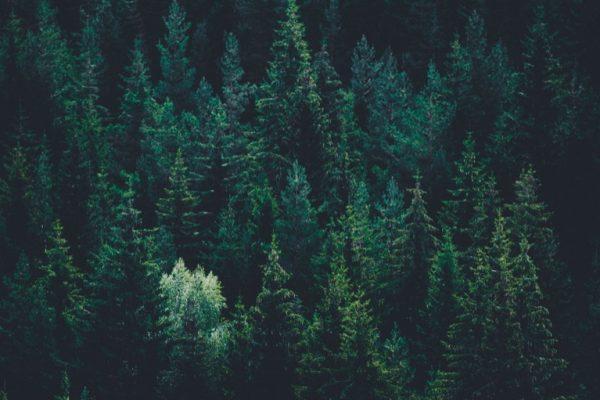 Rekordhög kvalitet på svensk skogsföryngring