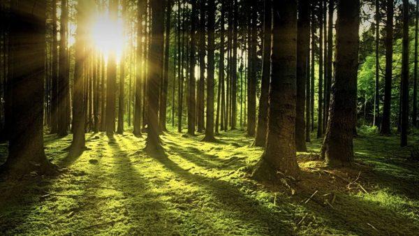 EUs plan för skogen – plantera 3 miljarder träd och halvera bekämpningsmedlet